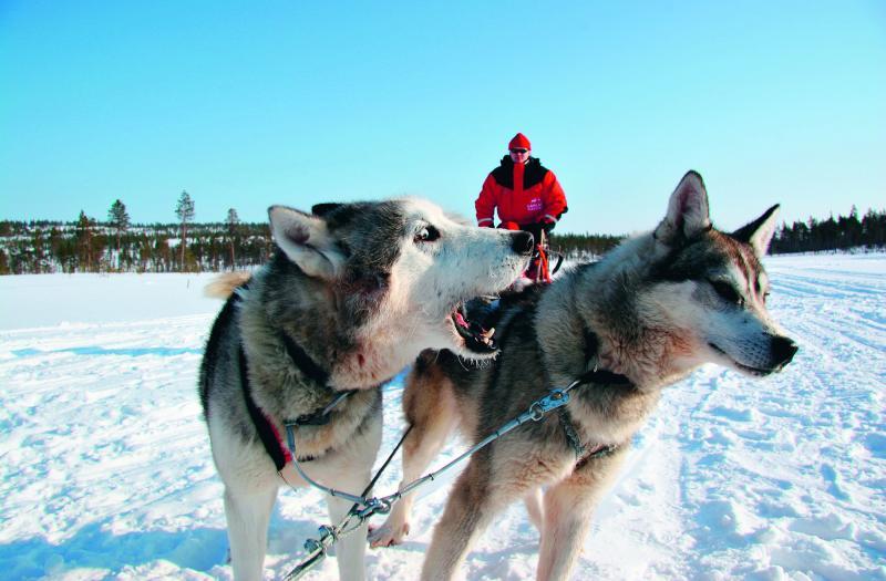 organisation de séjours incentive en Laponie par PREFERENCE EVENTS